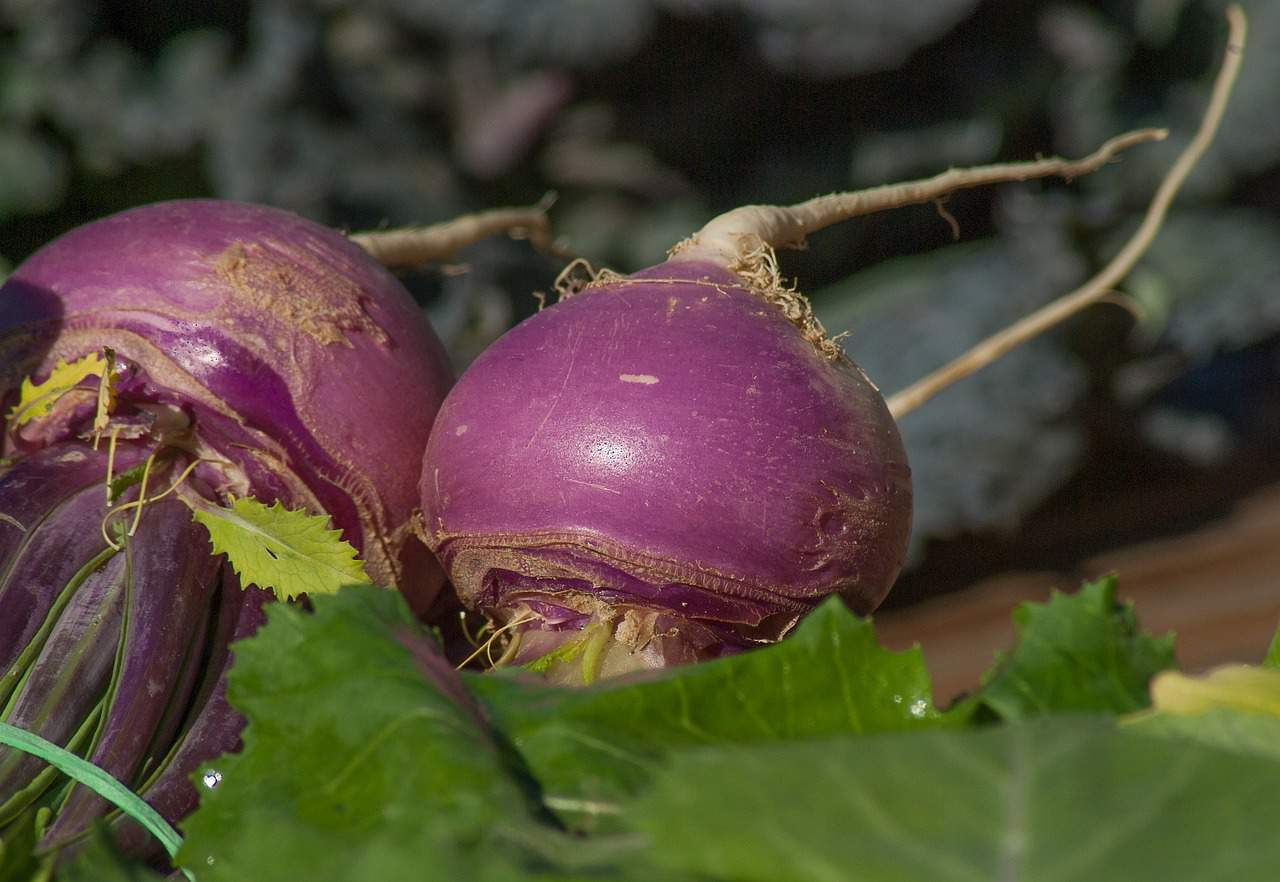 Foods that start with t - Turnips